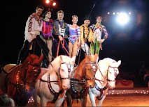 Circus act with white horses