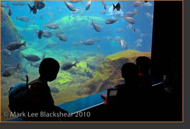 Viewing fish as the Brooklyn Aquarium